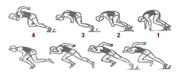 e4ea2a05c05a99 Нахил тіла повинен зменшуватись через 6-8 кроків, і тільки потім приймає  вертикальне положення. Швидкість бігу на короткі дистанції залежить від  частоти ...